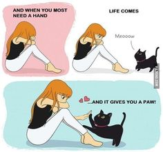 Love Pet, I Love Cats, Cute Cats, Funny Cats, Crazy Cat Lady, Crazy Cats, Animals And Pets, Cute Animals, Image Chat