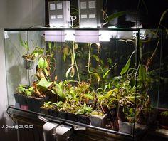 256 Best Carnivorous Plant Terrariums Images Carnivorous Plants