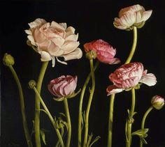 Mia Tarney - Ranunculus