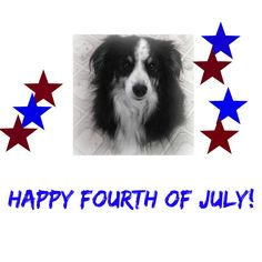 Aussies in Charge: Happy Fourth of July - Dog Show Saturday