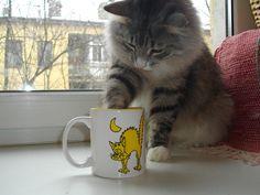 котики обормотики коты