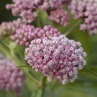Top 10 Fairy Tale Plants