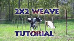 Training Dogs for Agility: Weave Poles for Dog Agility Dog Training School, Agility Training For Dogs, Dog Agility, Dog Training Tips, Australian Shepherds, German Shepherds, Blue Merle, Working Dogs, Dog Care
