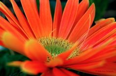 Orange Flower, my daughter took this picture! On of my favorites!