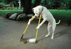 """What you see is not a human. Dogs don't know how to read, they couldn't even talk neither can they write? I could imagine if they can do such things like writing prolly' they would post a shout """"stop littering!""""   Would there be enough pride to swallow for us as a human, not to pay attention?"""