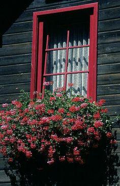 vintage girl / windows