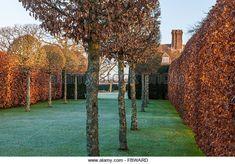 Carpinus betulus Hornbeam lollipop topiary walk - Stock Image