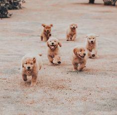 Super Cute Puppies, Baby Animals Super Cute, Cute Wild Animals, Cute Baby Dogs, Cute Little Puppies, Cute Funny Dogs, Cute Little Animals, Cute Funny Animals, Cute Cats