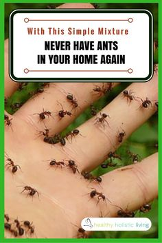 Spray This Simple Mixture and You Will Never See Ants in Your Home Again!