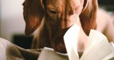Dog Poems, Marley And Me, Short Dog, Cat Character, The Donkey, Animal Books, Family Dogs, Good Thoughts, Nonfiction