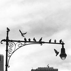 Pic by Dalila Pasotti