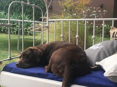 Coco.... siesta reparadora....