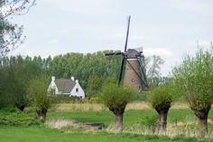 Molen de Roosdonck - Deze molen is door Vincent van Gogh verschillende keren op tekeningen en schilderijen vastgelegd. foto: Wallie54