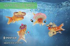 Pentair Aquatic Eco-Systems