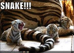 babies and pets  cute funny  | Funny Baby Animals Images 2011 | Funny Animals