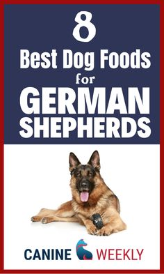 German Shepherd dogs need a good diet like all dogs. Get them the best dog nutrition and healthy dog food. Here are some dog food ideas and dog food tips. Dog Breeds Little, Top Dog Breeds, Best Dog Breeds, Best Dog Toys, Best Dogs, Dog Food Recipes, Food Tips, Food Ideas, Dog Training Treats