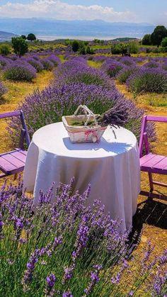 Lavender Cottage, Lavender Fields, Lavender Flowers, Lavander, Purple Roses, Valensole, Lavender Aesthetic, Outdoor Furniture Sets, Outdoor Decor