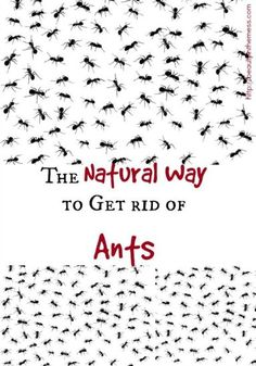 Natural Way to Kill Ants.  Do you have ants in your home or garden?  No need to pull your hair, here is an easy and natural way to rid your house of these pests!