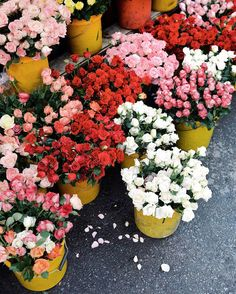 Ho Thi Ky Flower Market in Saigon (@stacieflinner)
