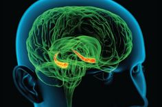 Memory System May Overcome Diverse Disorders - Scientific American
