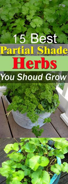 If you have a balcony or a spot on your patio that is partially shaded and doesn't receive a day long sun, then grow these shade loving herbs!