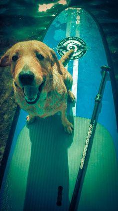 "Paddle Board best friend! ""Maaamz, can I haz a lifejacket?"" #SUP #dog #paddle"