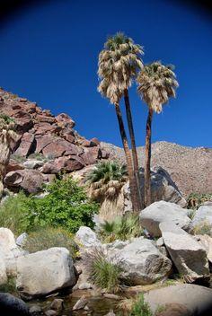 Palm Canyon in Anza Borrego Desert