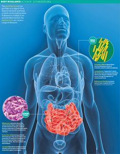 t's a #gut reaction: how other people's #bacteria can cure us – extract  There are 100 trillion bacteria in the gut, and one US professor is convinced that #transplanting them is the best way to combat gut #infections