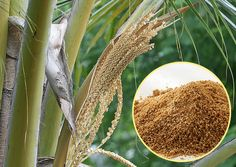 It may taste great, but coconut sugar may not live up to all of its health claims.