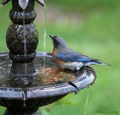 .sounds of birds and water, with the warmth of the sun.              t