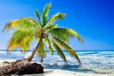 Picture of Green palms on a white sand beach with blue sky stock photo, images and stock photography. Beach Waves, Ocean Waves, Travel Info, White Sand Beach, Palm Trees, Stock Photos, Water, Green, Instagram Posts