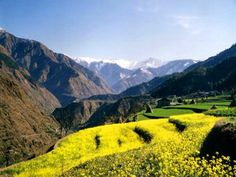 Fields of mustard in the Saho Valley, near Chamba, Himachal Pradesh. When I stay at my friends homestay at Orchard Hut, we take a day hike up the valley to the small town of Saho. These are some of the views. LOVE IT!