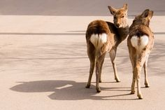 Deers Love by Gigin, via Flickr