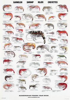 Shrimps 56 of the most common species of shrimp worldwide. Shrimps 56 of the most common species of shrimp worldwide.