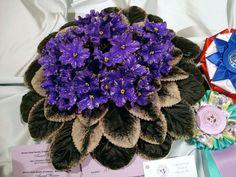 Product Type: BonsaiSize: Small,Mini,MediumBrand Name: ShaLaLaApplicable Constellation: CapricornUse: Indoor PlantsStyle: PerennialFull-bloom Period: SummerFlow