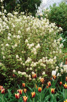 Your spring landscape will shine when these gorgeous shrubs begin blooming. Many of them also have beautiful foliage that is variegated or evergreen, so they'll continue to add some color to your yard even after their flowers fade. #gardenideas #gardenplants #landscaping #bestshrubs #floweringshrubs #bhg