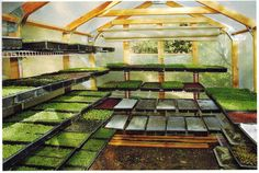 Microgreens have up to 40 times more vital nutrients than mature plants