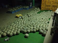 There are a lot of melons my family made!
