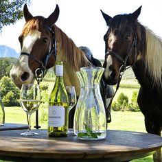 Séjour à cheval dans les vignobles d'Afrique du Sud