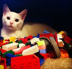 Im not da only kitteh wot plays wif LEGO.