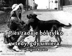Serious Quotes, Life Motto, True Stories, Bardot Brigitte, Life Quotes, Harry Potter, Pets, Words, Animals
