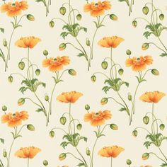 Persian Poppy Fabric Soleil/Green (DPFPPP202) - Sanderson Parchment Flowers Fabrics Collection