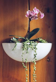 How To Keep Orchids Alive And Looking Gorgeous Orchids In Water, Indoor Orchids, Orchids Garden, Indoor Plants, Succulent Arrangements, Succulents, Floral Arrangements, Vertical Garden Wall, Living Room Plants