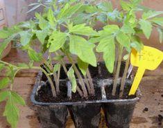Conoscere i concimi più utilizzati nell'orto. Come usarli con efficacia - Coltivare l'orto