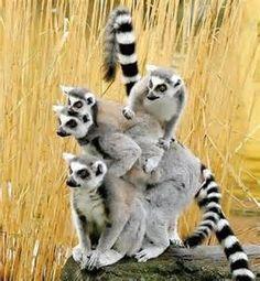FreeMada' - Madagascar in liberta' |
