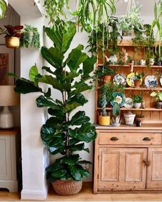 Best Indoor Plant Decoration To Copy Right Now 01