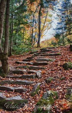stair steps to foliage in Grafton State Park-Maine fall foliage