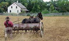 (Probably Old Order) Amish farmer plowing.