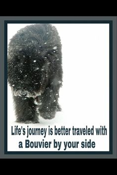I so love my Bouvier, she is my touchstone!