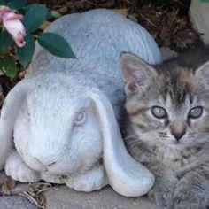 Bashful Bunny - 331